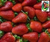 fresas o frutillas