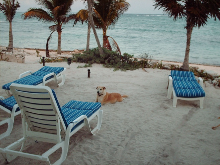 Pet Friendly Resort List  http://www.officialpethotels.com/?src_aid=1385~G~pet%20friendly%20hotels