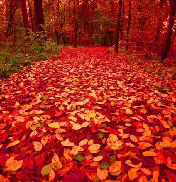 Autumn in Finland. Un letto di foglie vale un letto di casa