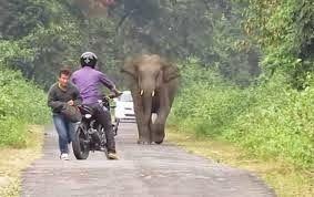 enjoymarket: Ελέφαντας κυνηγά μοτοσικλετιστές