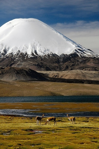 Lake Chungara, Lauca National Park #Chile