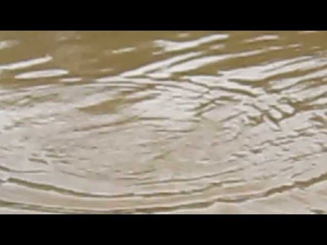 pescaria no rio Paraopeba mg! dourado de 7kg! na isca natural!