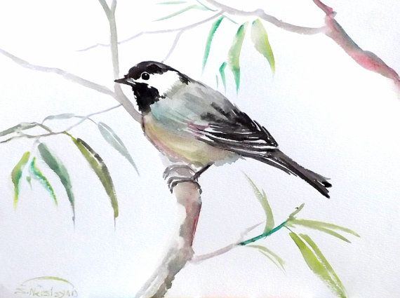 how to draw a chickadee youtube
