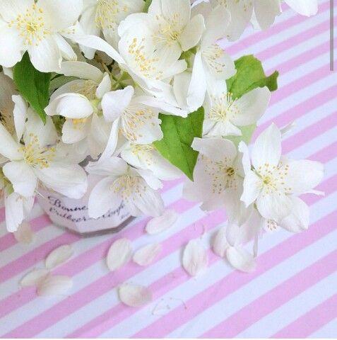 Çiçekler**