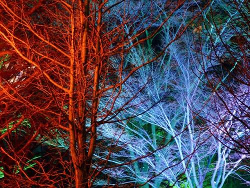 A Different Flood Light On Each Tree Beautiful Garden