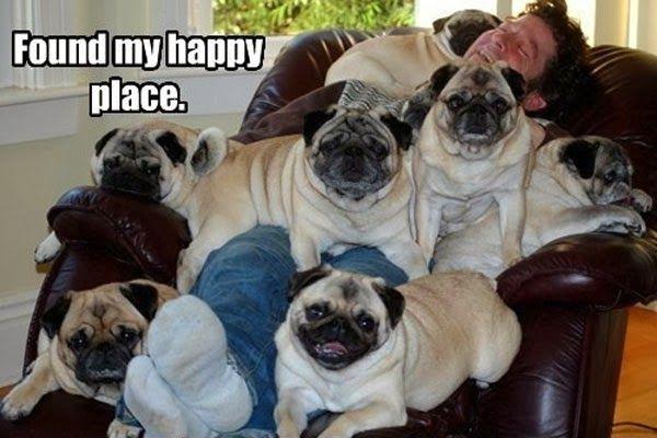 Картинки по запросу funniest dogs in the world