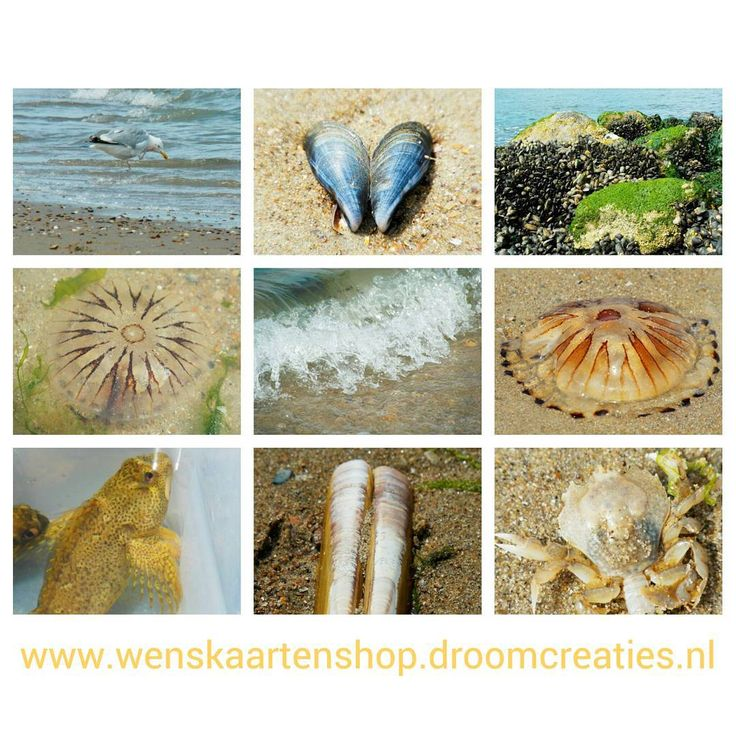 Collage of a day at the beach in Holland #collage #photocollage #photocollection #wishcardshop #wenskaarten #fotografie #wenskaartenshop #droomcreaties #instagram #images #postcards #beach #strand #shells #jellyfish #sea #holland