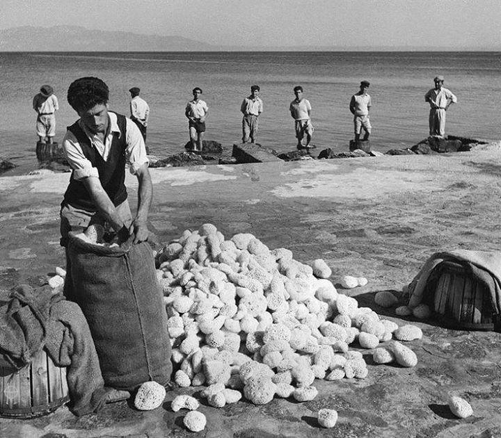 Κάλυμνος,1955 Πάτημα των σφουγγαριών για να μαλακώσουν. Φωτογράφος:Δημήτρης Χαρισιάδης-Αρχείο Μουσείου Μπενάκη.