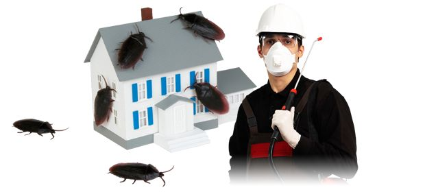 24*7 Bed Bug & Pest Control Emergency Service
