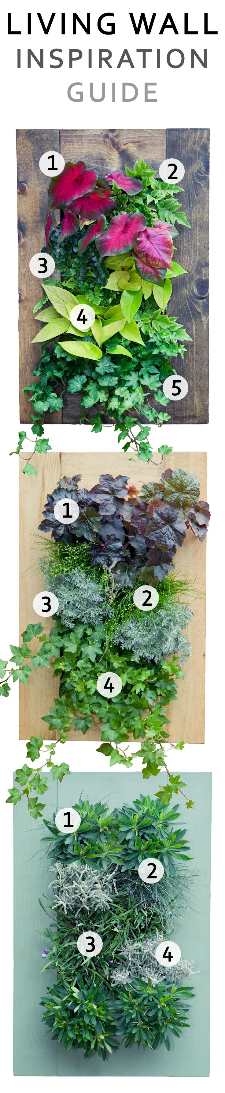 Find Inspiration For Your Own Lush Living Wall Top 1