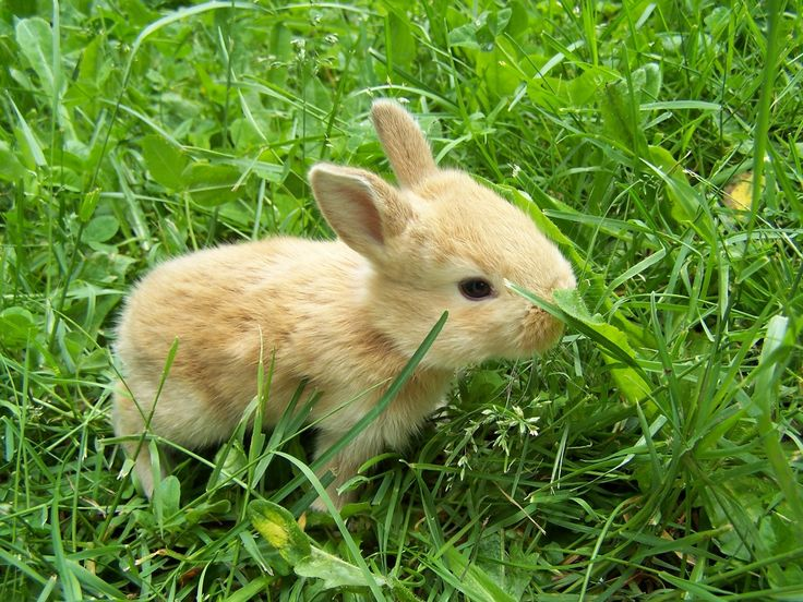 rabbits - Google Search | Adorable, Sweet, and Cute ...