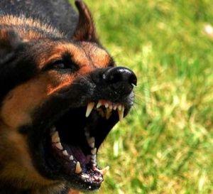 Terreur à Khouribga : Un chien errant dévore un bébé
