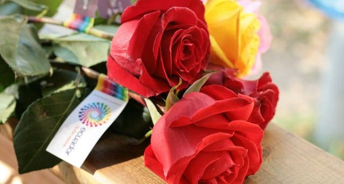 Las rosas ecuatorianas conquistan al mundo