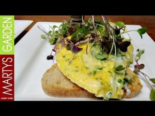 Kale Microgreens Omelette Video Recipe By Martys Garden. This is one of my all time favourite recipes that can easily come directly from the garden. If you can't access microgreens just chop op some Kale into very fine pieces. Remember to pin this recipe on your favourite board for future reference. Happy Cooking Marty Ware