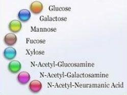 De glycobiologie