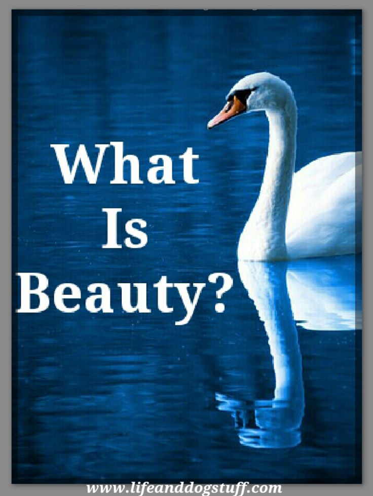 What Is Beauty? #blogger #blog
