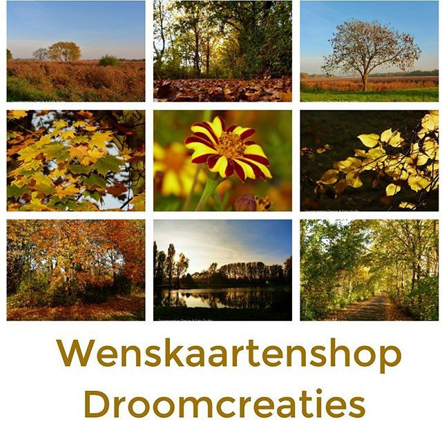 AUTUMN ☆ greetings from Holland! ☆ #wenskaart  #wenskaarten #postcards #wenskaartenshop #wishcards #autumn #autumncolors #greetings #greetingcards #holland #herfst #herfstfotografie #herfstfotos #droomcreaties #picoftheday