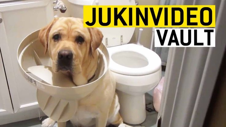 Guilty Dogs Compilation from the JukinVideo Vault