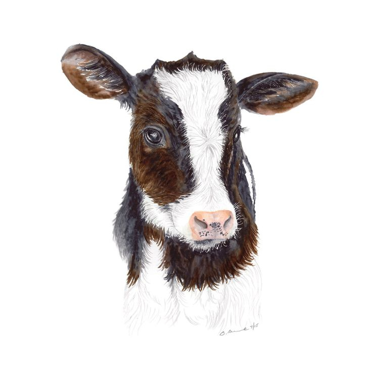 The baby cow is a fine art print of Brett Blumenthal's original farm animal portrait. With a white and dark brown color palette, the artwork is perfect for a farm-themed nursery or as farmhouse decor.