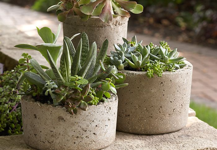 Cement Peat Moss : Best images about gardening containers see also g