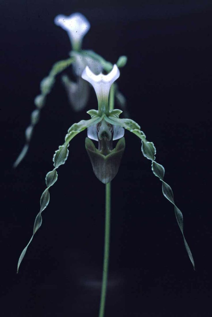 Beautiful orchids, beautiful photo