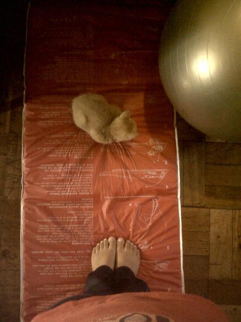 Gato Pilates. by r●ci●, via Flickr