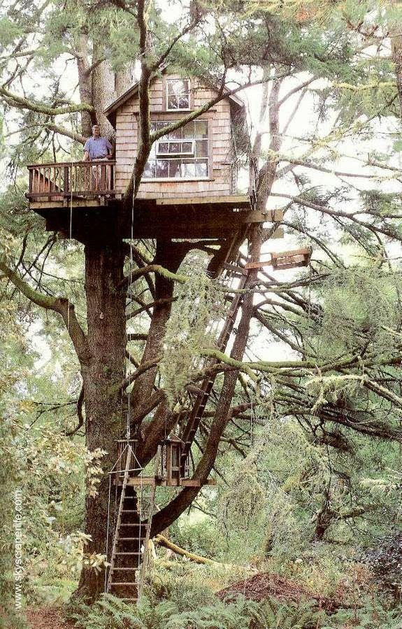 Pequeña cabaña de madera con balcón soportada por tronco y ramas
