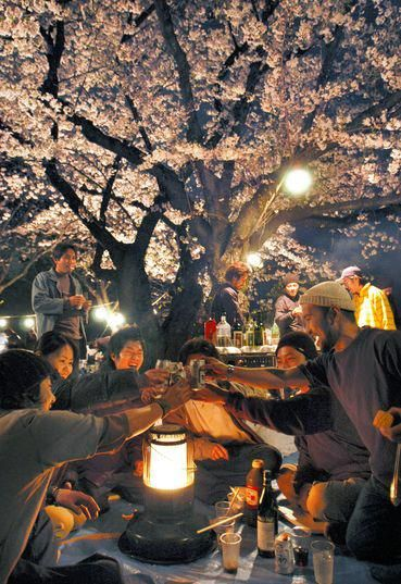 Hanami -- The traditional Japanese custom of enjoying the beauty of flowers. People make merry under the sakura (cherry blossoms) late into the evening.