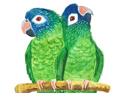"Check out new work on my @Behance portfolio: ""Parrots"" http://be.net/gallery/37224061/Parrots"