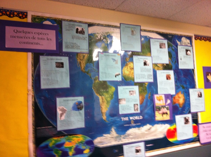 Endangered animals from each continent group project/bulletin board