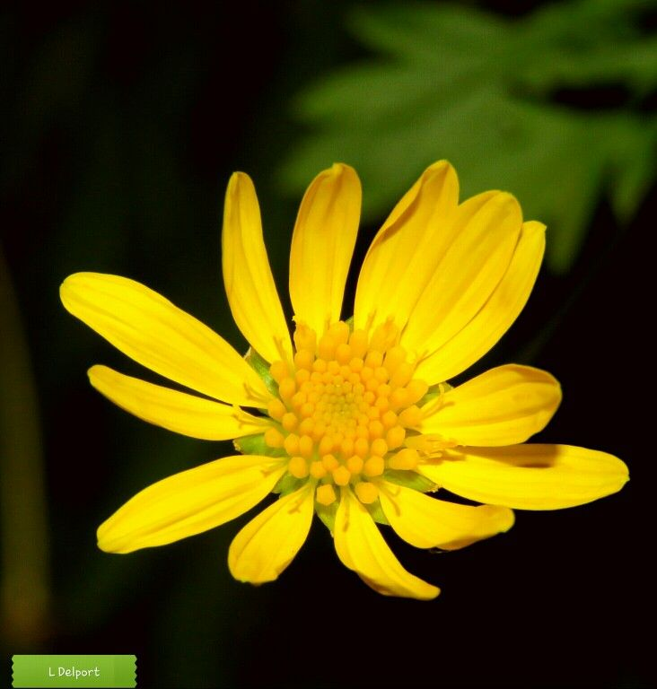 Yellow flower. Lighting. Sun shining. Texture.