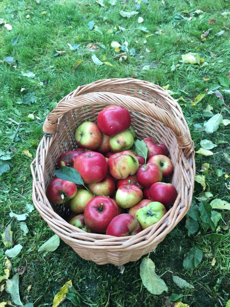 Our apples - the best ones 👍