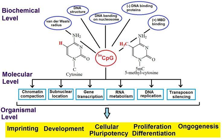 Δομή και λειτουργία των νουκλεϊνικών οξέων
