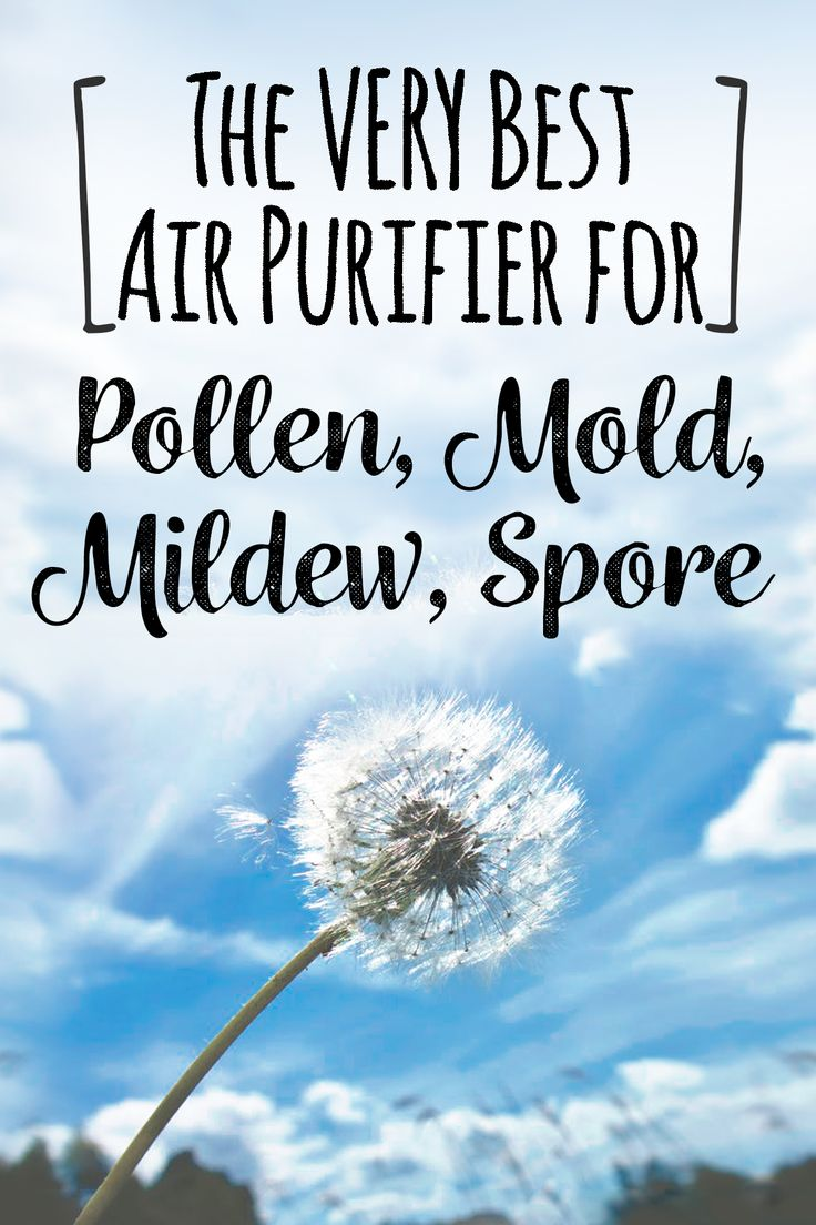 2020 Best Air Purifier for Mold Spores, Mildew and Pollen