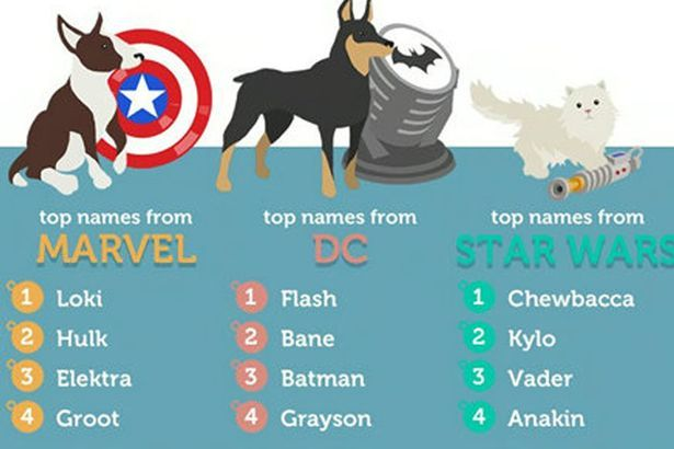 Pets Name Pet Names Best Dog Names Dog Names