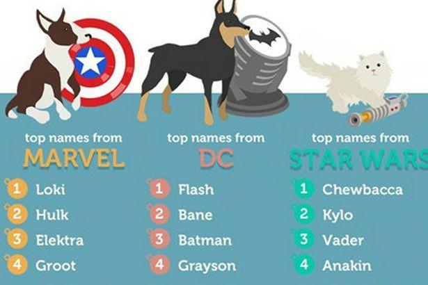 Pets Name Pet Names Best Dog Names Dog Names