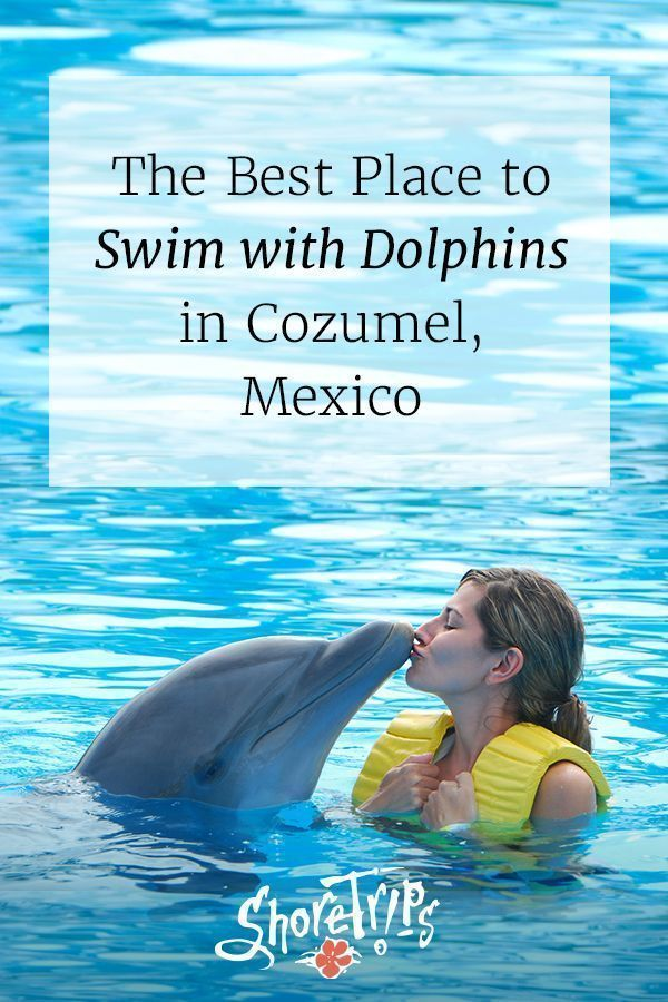 2356d7ad5df Swim with the dolphins in cozumel-the royal swim in 2019 | Caribbean  cruises | Caribbean vacations, Cozumel, Beach adventure