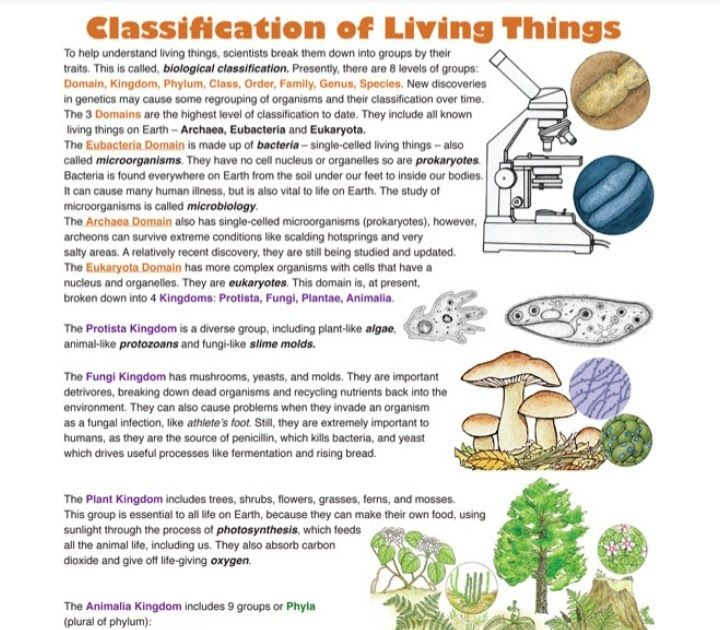For Classification Of Living Organisms Detailed Explanation Click On The Link Below Https Drive Google Com File D 136d7m Classification Organs Life Science