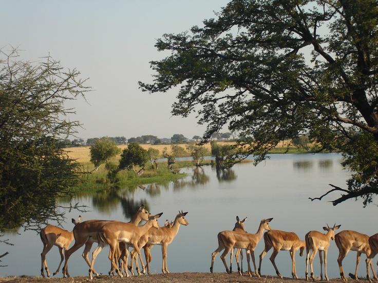 Chobe River - Botswana