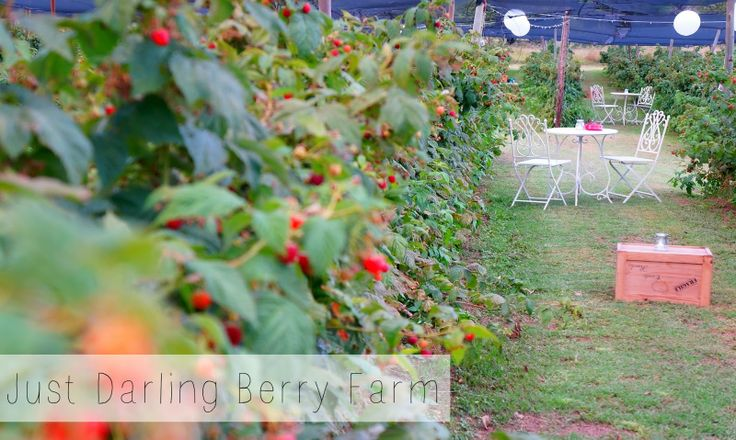 T & Serendipity: Just Darling Berry Farm, South of Joburg