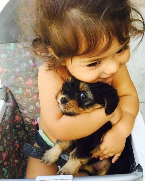 Cute dog. Wing cuddled by a little girl