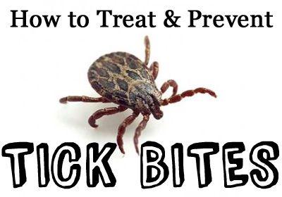 Tick Bites And Lyme Disease Symptoms Tick Bite And Ticks