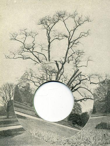 David Gates - Tree
