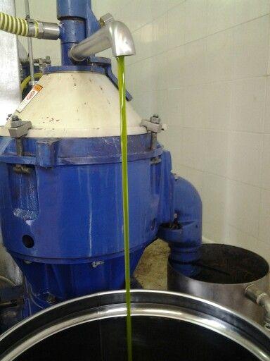 Ecco il nuovo olio Terre Rosse 2013 colore da brividi e profumo da svenire