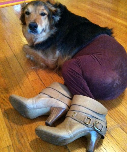 dogs wearing pantyhose | Funny Dogs In Pantyhose | SMOSH
