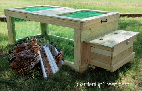Backyard Quail Coop - Build a mobile quail home, it easy to move and another way to house Quail naturally.