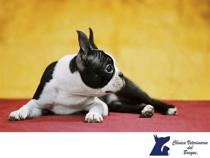 Mi perro tiembla mucho ¿A qué se debe? CLÍNICA VETERINARIA DEL BOSQUE. Existen muchas razones por las cuales tu perro podría temblar, por ejemplo, si sufre de una enfermedad neurológica, pero también puede ser por miedo, fiebre o frío. En Clínica Veterinaria del Bosque te recomendamos traer a tu mascota de inmediato a Clínica, para descartar cualquier enfermedad y que tu perro se encuentre en perfecta salud. #veterinaria