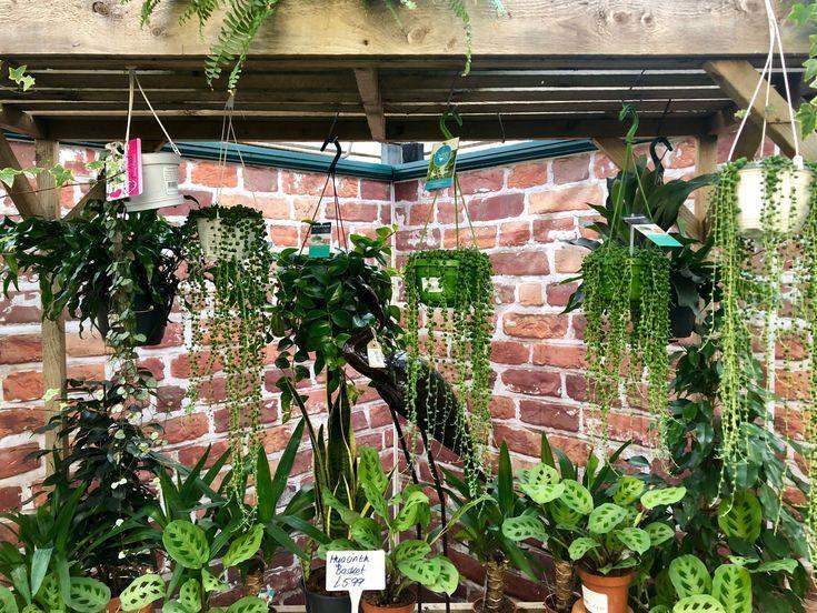 House Plants At Laylocks Garden Centre Laylocks Garden Centre