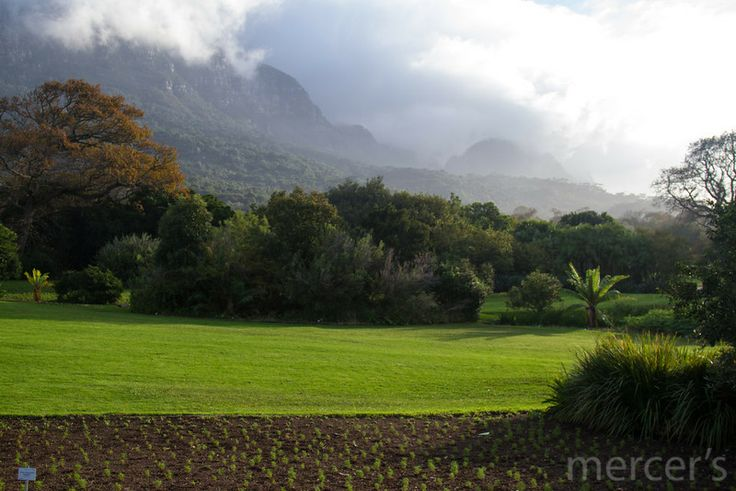 Lawns towards the mountains