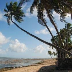 """Oferta de viaje a Brasil  Estancia en Praia do Forte  6 días - 5 noches  Estancia de 6 días en Praia do Forte (Brasil).   Esta villa turística, también conocida como la """"Polinesia Brasilera"""" es un verdadero paraíso del turismo ecológico. Localizada a 50 km de Salvador, en la región denominada Costa dos coqueiros http://www.belydanaviajes.es/oferta/viaje/brasil/25403/estancia_en_praia_do_forte"""